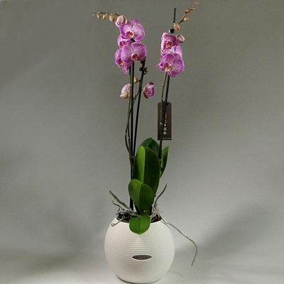 Send orchids to Moscow