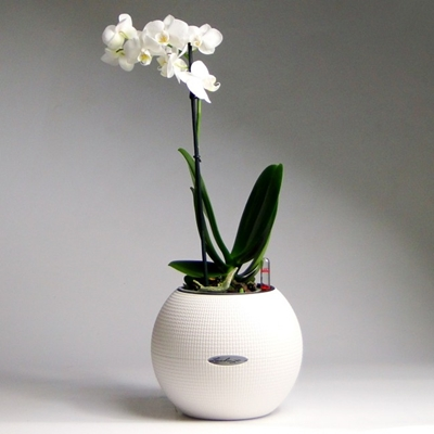 Send Orchid to Russia